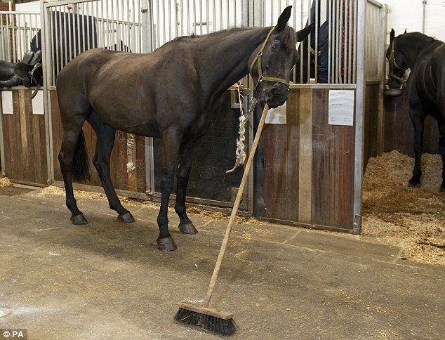 Image result for sweep out the stables