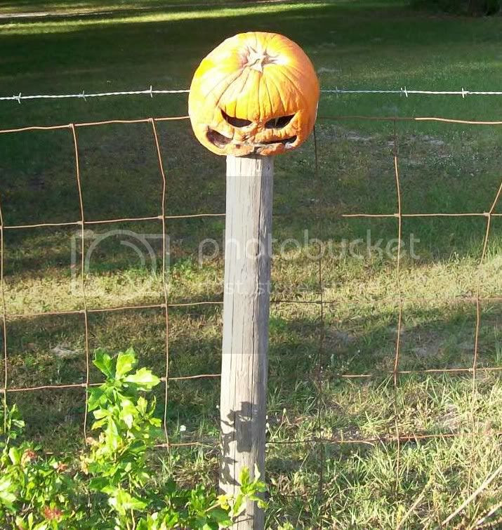 Another 358 days to go until Halloween?