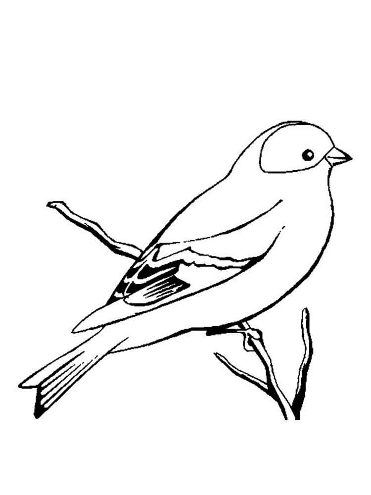 Canary birds coloring pages 12