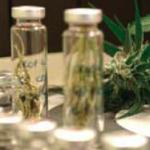 Cannabis VS Chemioterapia