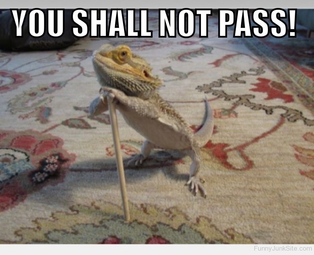 Funny Lizard Pictures » You Shall Not Pass