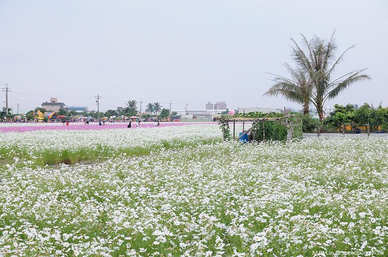 大寮花海 (18).jpg