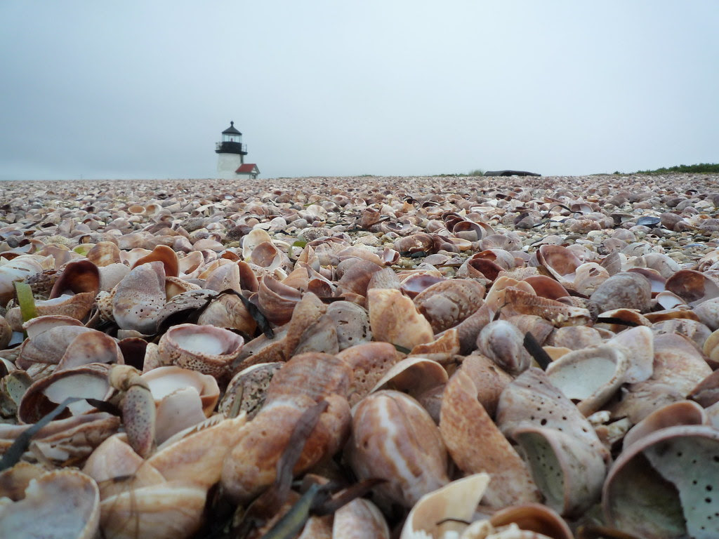 Sea Shells and Brant Point Lighthouse, Nantucket, MA