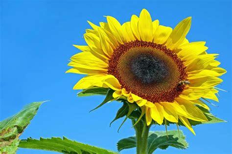 kostenlose bild flora natur blatt sommer blume