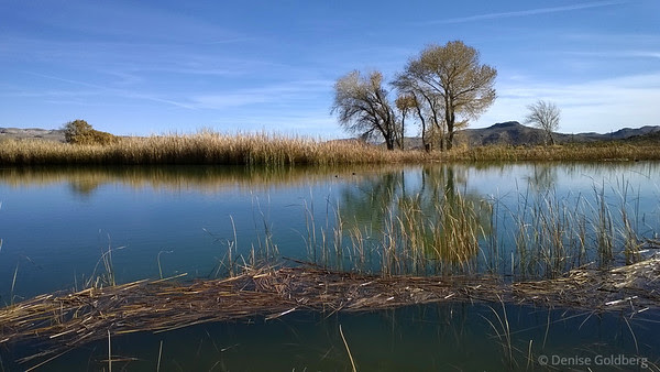trees reflecting, at Spring Mountain Ranch State Park