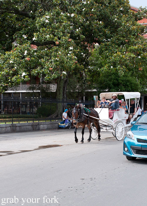 horse and carriage rides in new orleans louisiana