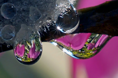 spring water drops