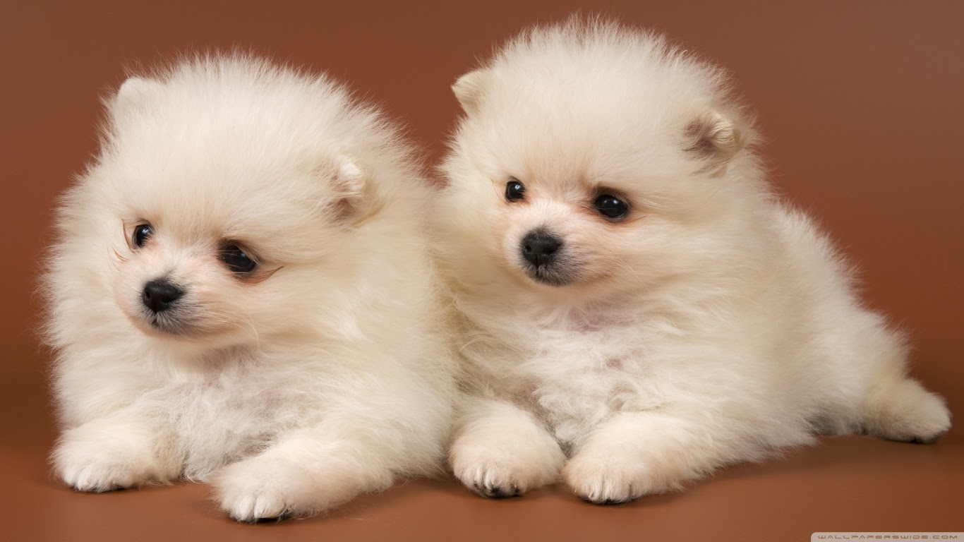 Dog Cute Face Wide Wallpaper Styles Wallpapers