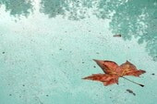 Nature Photography - 8x10 Fine Art Print, Floating Autumn Leaf Photo, Orange Leaf, Green Blue Water, Leaf Photography - Wall Art, Home Decor - lixhewettphotography