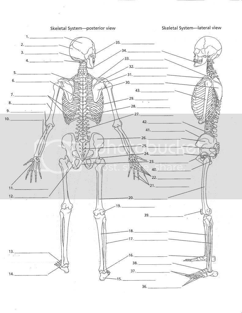 34 Blank Skeleton Diagram To Label - Labels Database 2020Labels Database 2020