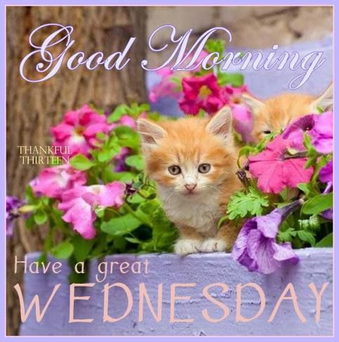 Good Morning Have A Great Wednesday Pictures Photos And Images For