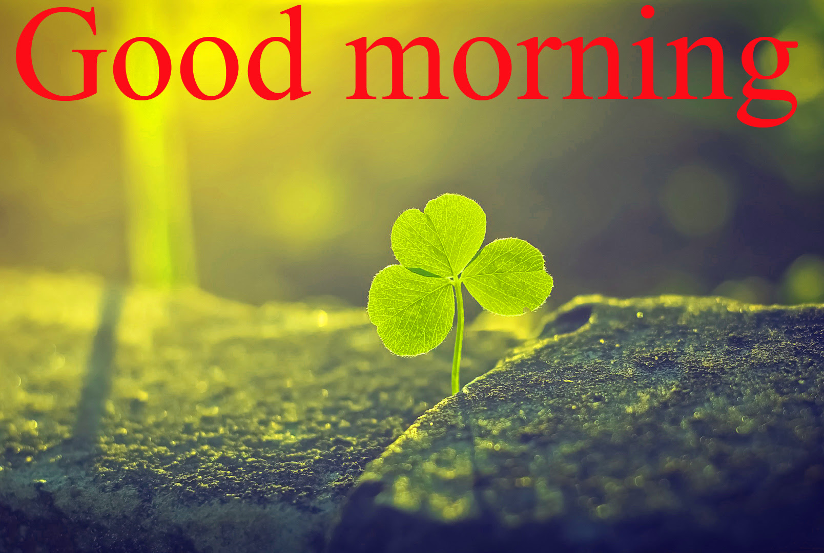 Good Morning And Good Luck Wishes For Student Exam Interview