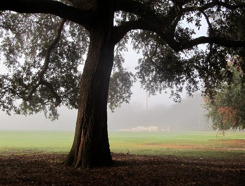mist04