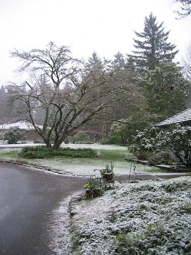 Snowy Commute in March