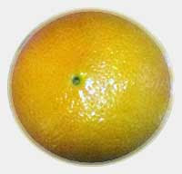 Narandza