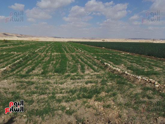 قرى فقيرة فى أسيوط (6)