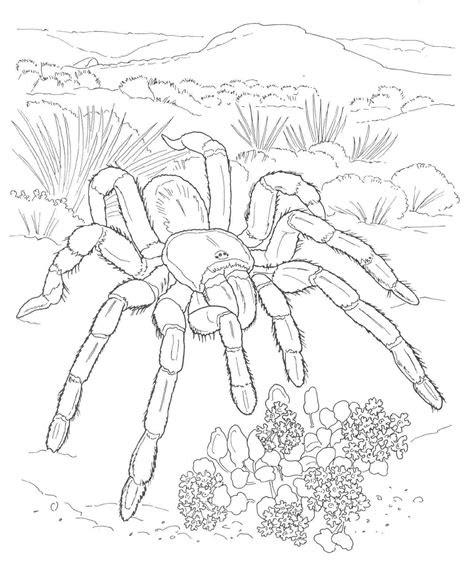 desert coloring page coloring home