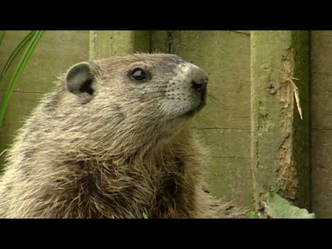 Groundhog Day (videos from Youtube)