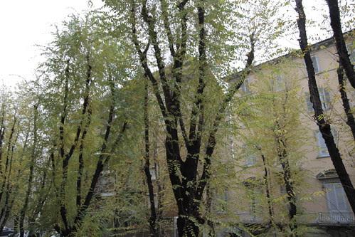 Nice Turin tree