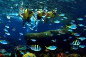 5 Tips Snorkeling Ramah Lingkungan