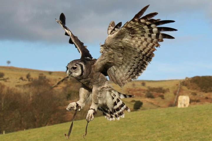 Falconry Experience Day