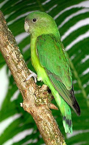 partnervermittlung papagájok fulda ismerősök