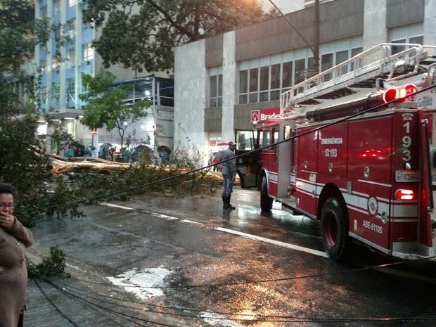 Corpo de Bombeiros trabalha na remoção de árvore que caiu na Avenida Brigadeiro Luis Antonio, em São Paulo (Foto: João Paulo Monteiro Fiori/VC no G1)