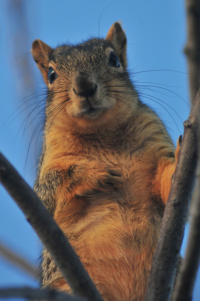 Sunrise Squirrel