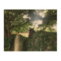 Churchyard Horse at St Day Cornwall Wood Canvases