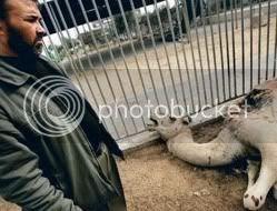 GazaZoo_Camel