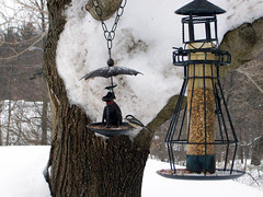 Birdfeeders_211