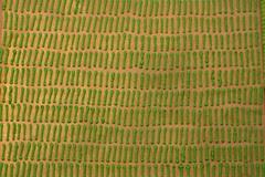 a thousand blades of grass