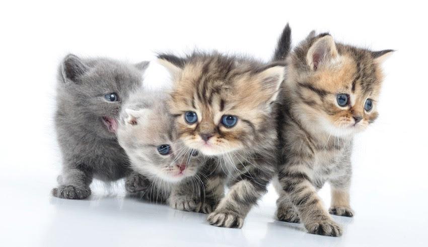 schönes Katzenbild - Viele süße Katzenbilder und ...