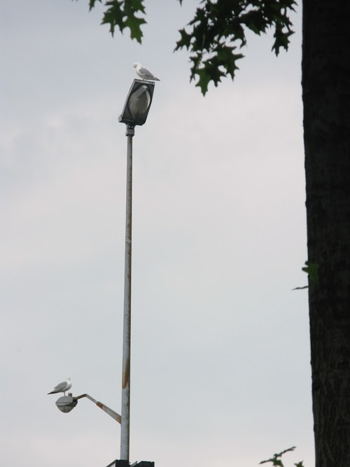 two seagulls on a lamppost, West Side Highway, Manhattan, NYC