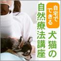 GREEN DOG ホリスティックケア・カウンセラー養成講座