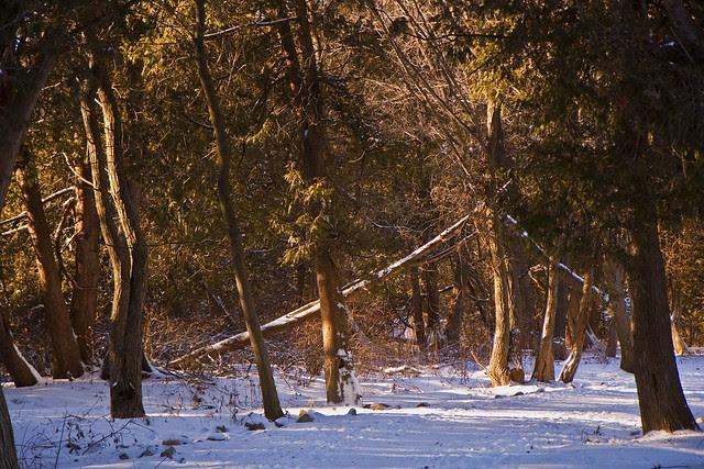 cedar grove morning