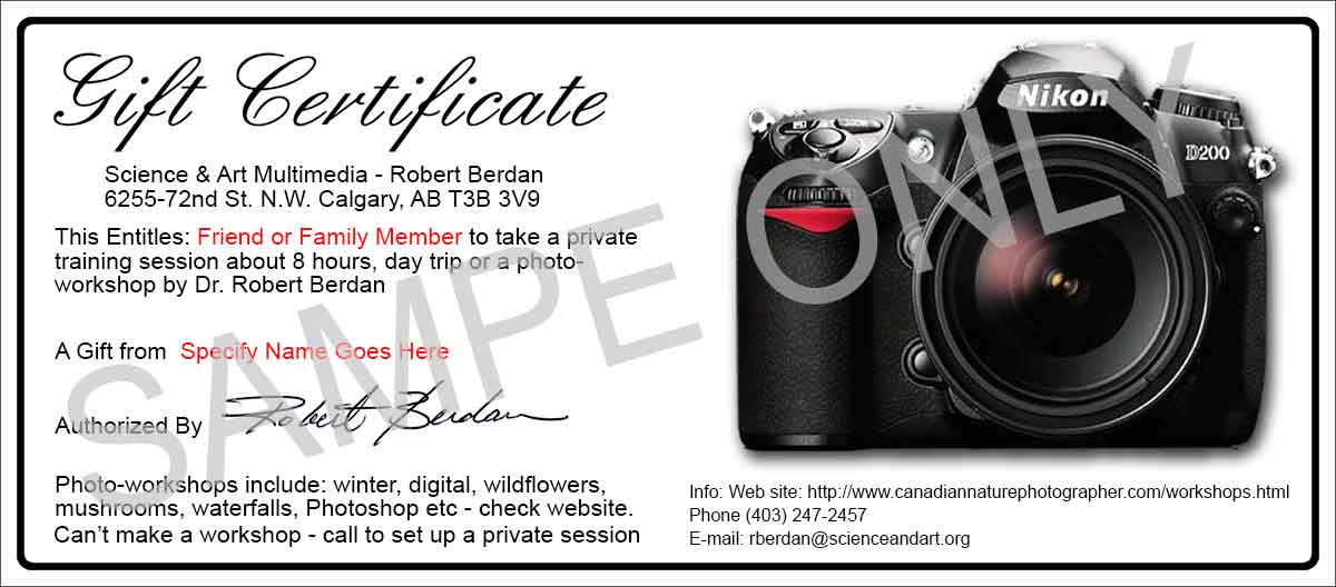 Photography Gift Certificate Wording Romefontanacountryinncom