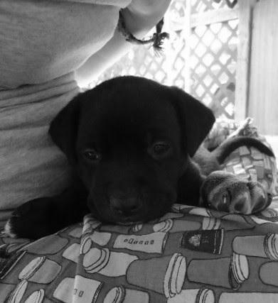 oddball when he was a puppy by raylynntexas