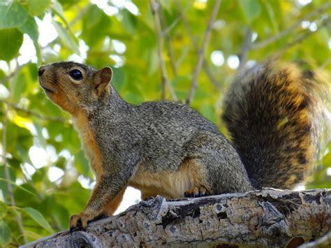 Richmond VA Wildlife Removal & Animal Trapping