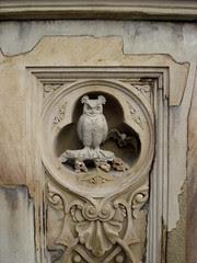 owl, Central Park