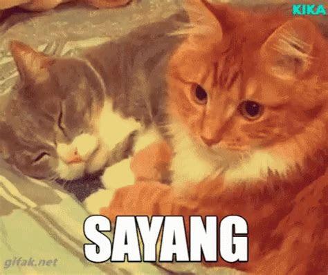 sayang kucing gif sayang kucing kucinglucu discover