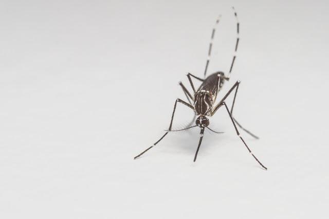Zika Fears Hit Home in the U.S.