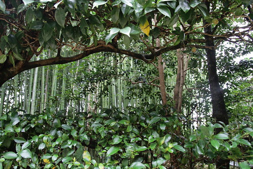 Bamboos and trees