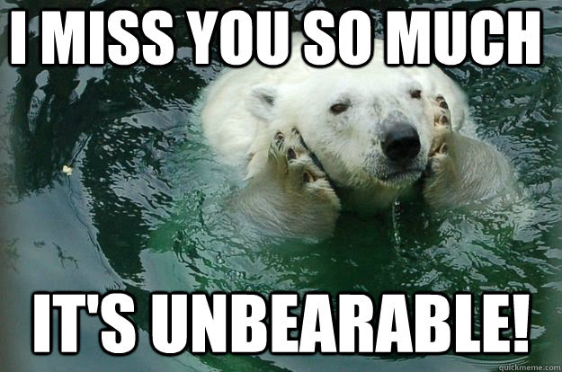 I Miss You So Much Its Unbearable Worried Eco Bear Quickmeme