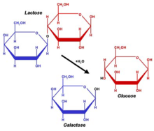 lactose ( source wikipedia : article lactose)