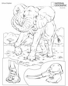 Free Printable Animals Coloring Pages From National ...
