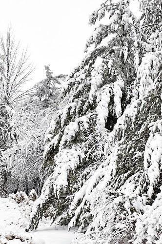 Orillia - Winter Roads 2