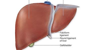 """فيتامين """"هـ"""" يخفض دهون الكبد بين الأطفال - صورة أرشيفية"""