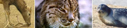 Más de un tercio de las especies de animales conocidas están en peligro de extinción  (Imagen: 20MINUTOS.ES)