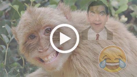 video lucu banget terbaru bikin ngakak abis toplucu